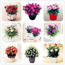 mothers day flowers 20 20 pcs bag carnation flower dianthus barbatus mini