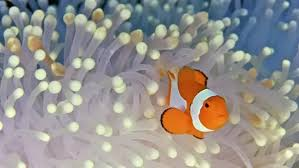 what are some examples of a symbiotic relationship in the ocean