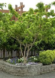 244 best garden delights trees images on pinterest notebooks