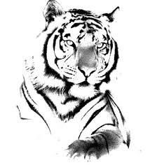 20 popular tiger tattoo designs