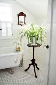 bathroom bathroom plants