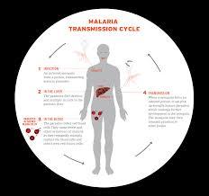 Cdc Malaria Map Malaria