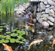 koi ponds u2013 black brook lawn u0026 landscaping