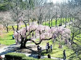 brooklyn botanical garden sassysipsnyc