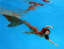 Mermaid Fairy Twig The Fairy In Mermaid Form I Took This Underwater Port U2026 Flickr