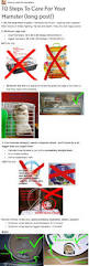 How To Care For Your by Best 25 Hamster Care Ideas On Pinterest Dwarf Hamster Care