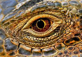 dragon u2013 conscious companion