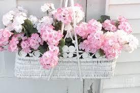 shabby flowers dreamy pink white hydrangeas in hanging basket shabby chic