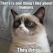 Ugly Cat Meme - what are the funniest grumpy cat memes quora