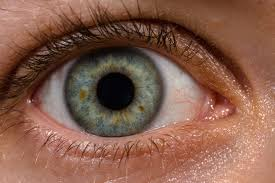 Mcgraw Hill Anatomy And Physiology Saladin 6th Edition Human Eye