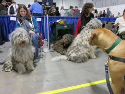 Dog Show Thanksgiving Day The National Dog Show My Favorite Thanksgiving Tradition