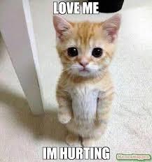 Love Me Meme - love me im hurting meme kitten timesheet 60953 memeshappen