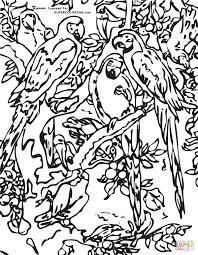 parrots coloring pages parrots by frans snyders coloring page free printable coloring pages