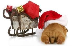 puppy bulldog puppy sitting beside sleigh