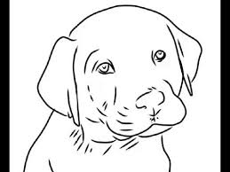 how to draw cute labrador puppy easy drawings youtube