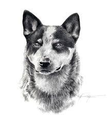 australian shepherd keychain australian cattle dog art print signed by artist d j rogers