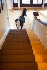 Laminate Flooring And Dogs How To Make Your Dog Stop Skidding U0026 Falling At Home Taildom