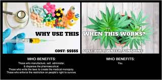 Legalize Weed Meme - why pharmaceuticals cannabis works legalize weed memes