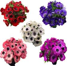 purple roses for sale anemones flowers for sale order anemone flower online