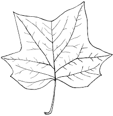 leaf clipart tulip pencil and in color leaf clipart tulip