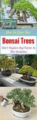 how to care for bonsai trees don u0027t neglect any factor in this