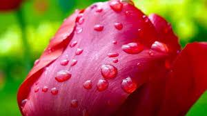 Beautiful Flowers Image Beautiful Nature Images Hd Nature Beautiful Flowers Nature