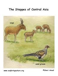 steppes of central asia