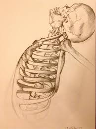 skeleton sketch by georgiethomas7 on deviantart