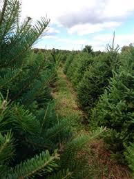 trees to please norridgewock maine premium quality christmas