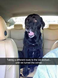 Dog At Vet Meme - looks exactly like buddy poor thing funny critters pinterest