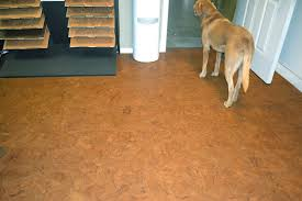 cork flooring and dogs 5201