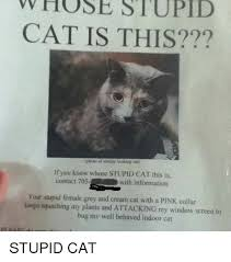 Stupid Cat Meme - whose stupid cat is this photo of similar looking cas if know whose