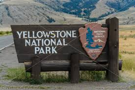 east entrance road in yellowstone national parked