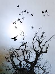 birds flying from tree 1000 images about ideas on