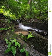 tropical rainforest native plants green forest background nature jungle park with tropical trees