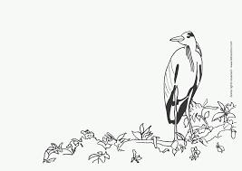 coloring birds u2013 letmecolor