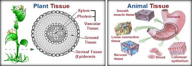 Diseases In Plants And Animals - comparison and different types of plant tissue and animal tissue