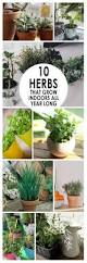 best 25 growing herbs indoors ideas on pinterest how to grow