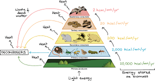 food chains u0026 food webs article ecology khan academy