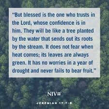 niv verse of the day jeremiah 17 7 8 bible verses pinterest