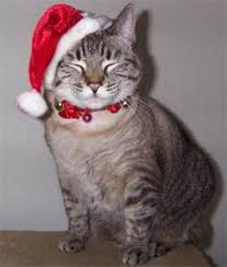 cat christmas a christmas cat poem the infinite cat project cat tales