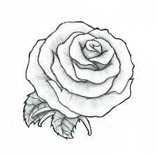 rose drawing picture how to draw an open rose youtube drawing
