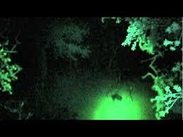 green light for hog hunting hog hunting the bowlite in white light youtube