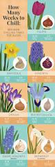 329 best gardening images on pinterest fruit garden vegetable