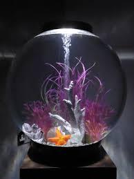 best 25 biorb fish tank ideas on fish tanks fish