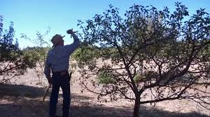 drought impacts fall apple picking in julian nbc 7 san diego
