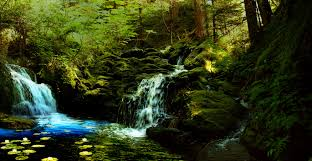 cool trees waterfalls beautiful blue splendid woods cool trees charm touch