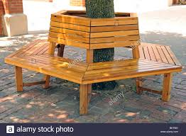 bench wrapped around tree stock photo royalty free image