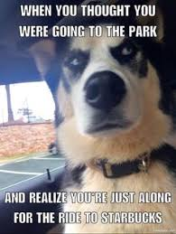 Funny Husky Memes - pin by denise rodriguez on cute pinterest siberian huskies