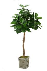 6 fiddle leaf fig tree in weathered wood box planter artificial